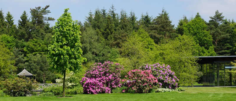 Rhododendronpark Bruns in Gristede